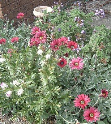 garden1_21-9-07.jpg